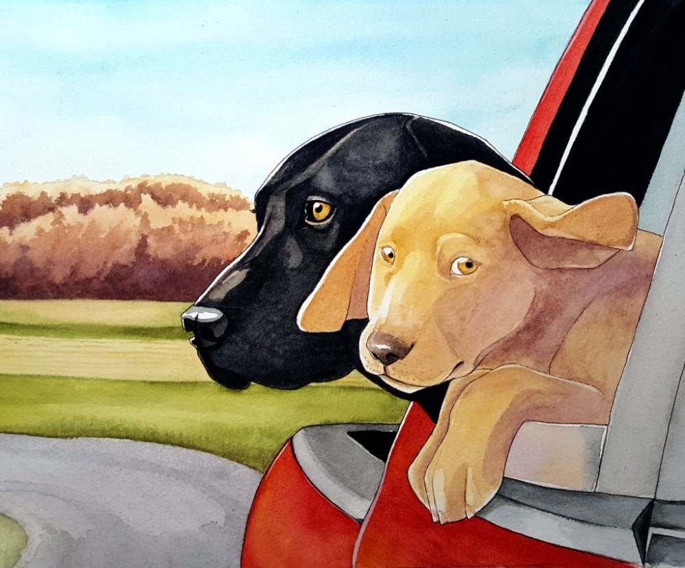 dogs riding in the car illustration by michelle miller