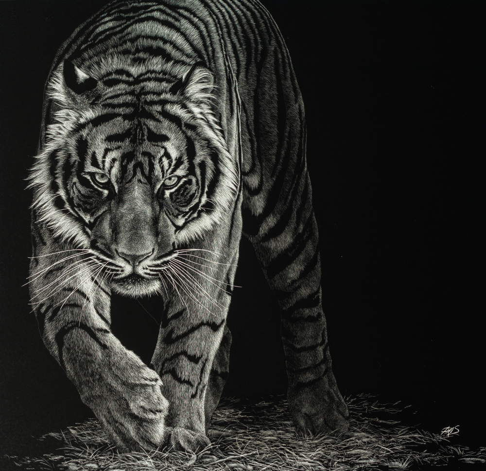 scratchboard tiger art