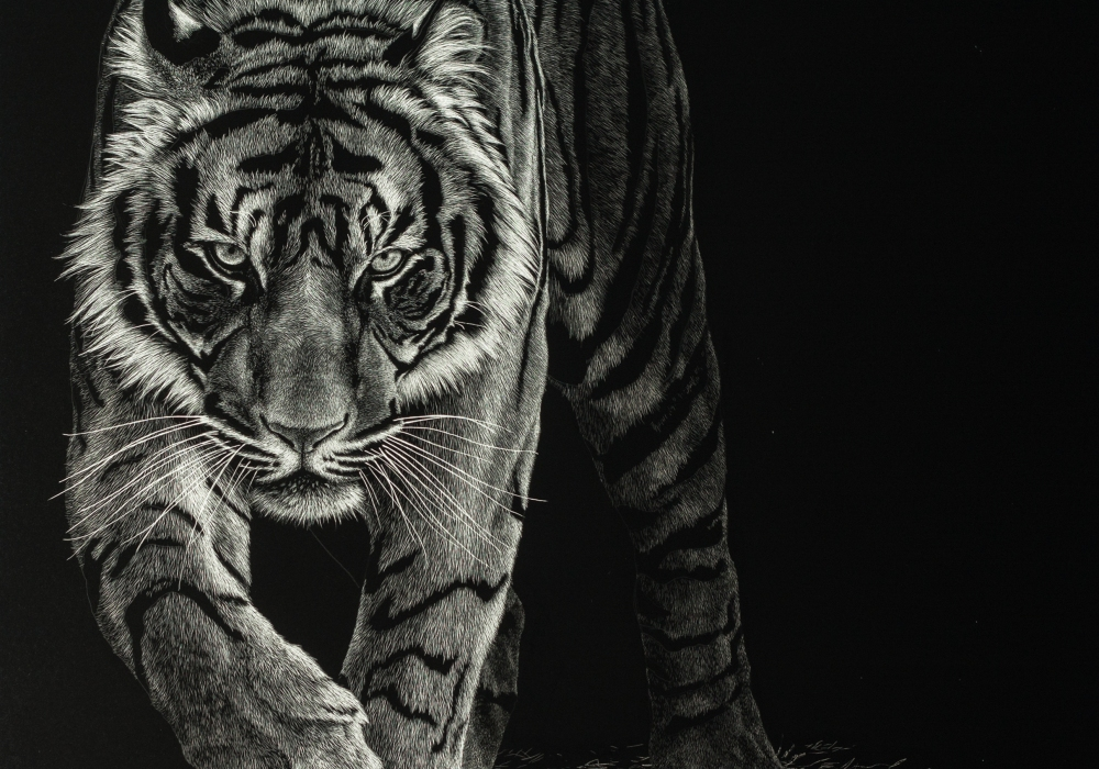 scratchboard tiger art